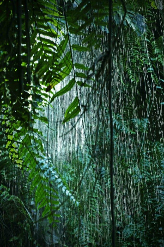 Water fall WEB