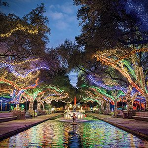 Houston Zoo Lights Excursion Everydayphotoclass
