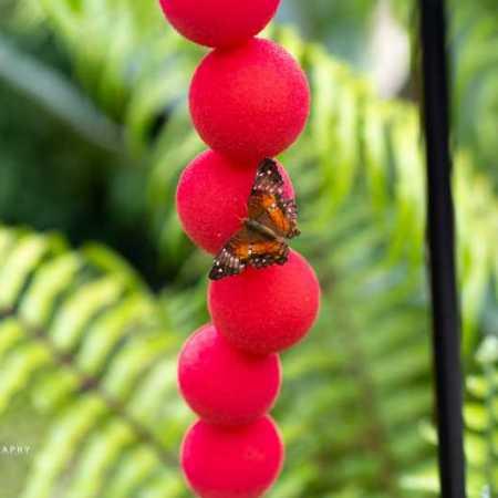 Butterfly Center (1 of 6).jpg