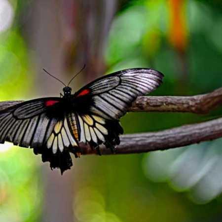 ButterflyMuseum (11).jpg