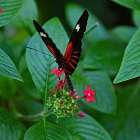 ButterflyMuseum (15).jpg