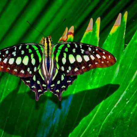 ButterflyMuseum (22).jpg