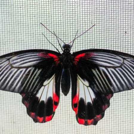 Cockrell butterfly center-5002444.jpg