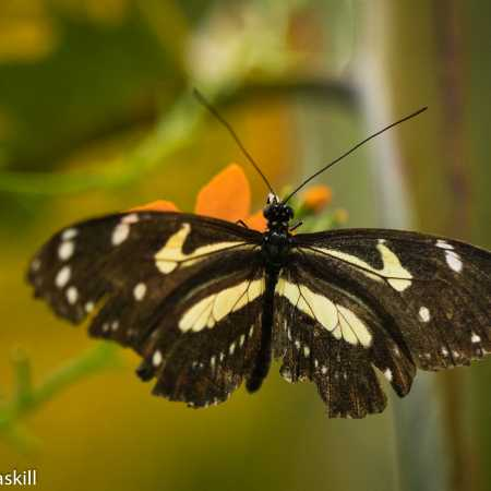 Butterfly Collection-16.jpg