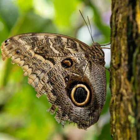 butterfly museum-5.jpg