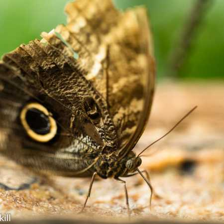 Butterfly Collection-19.jpg