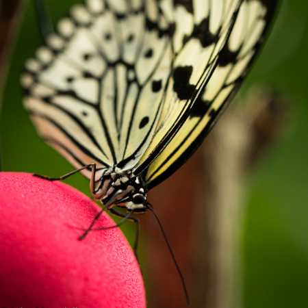 Butterfly Collection-23.jpg