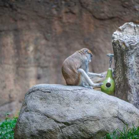 zoo (47 of 68).jpg